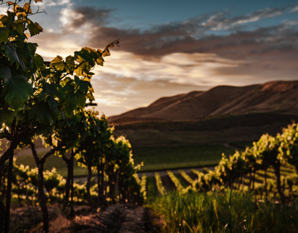 Wijnbouw Reis door de wijn