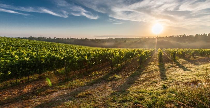 Toscane Reis door de wijn