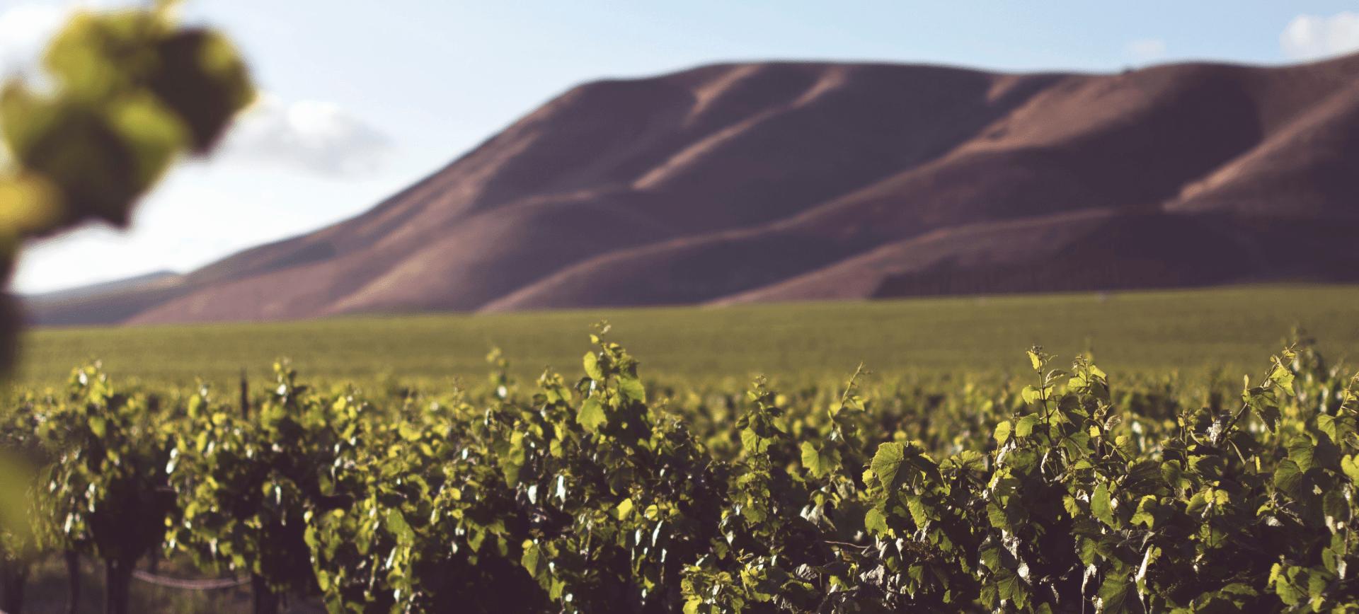 Landschap Reis door de wijn