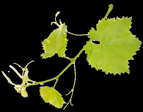 Wijntak Reis door de wijn